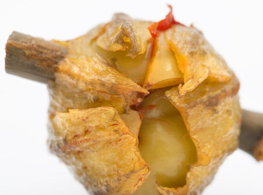 Las deliciosas berenjenas de Almagro y sus excelentes propiedades nutricionales
